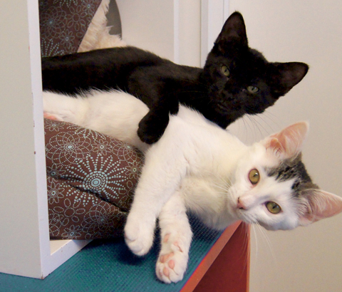 Happy Cats Haven – Giving homeless Colorado cats another chance for